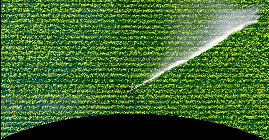 autoconsumo agrícola